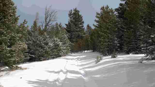 SNOW -2.jpg