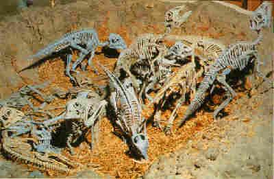 Exploring the Environment of the Mesozoic