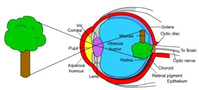 visual pathway perception pain neuroscience the prehab guys