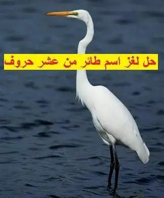 حل لغز اسم طائر من عشر حروف موقع مصري