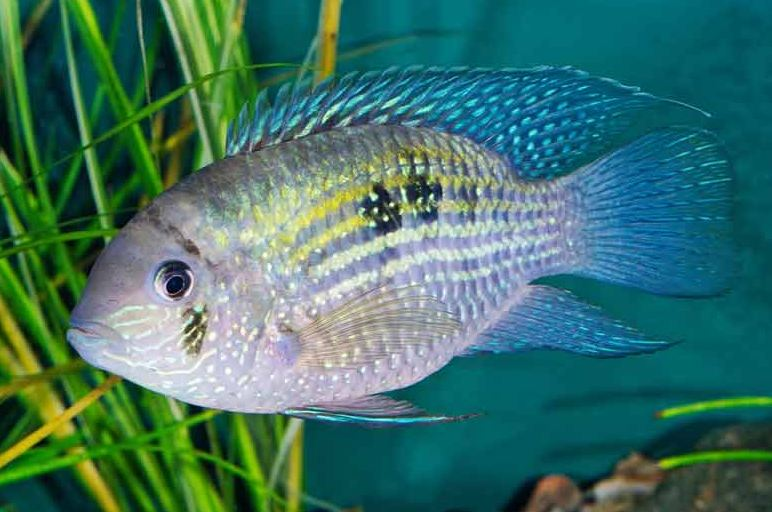 تعرف أكثر على تفسير رؤية السمك في المنام للحامل موقع مصري