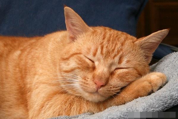cats love sleeping 02