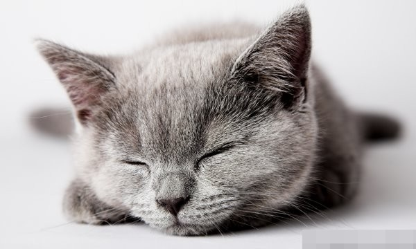 cats love sleeping 04