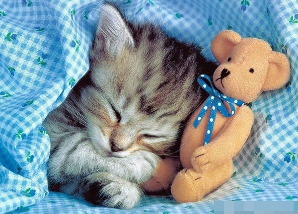 cats love sleeping 05