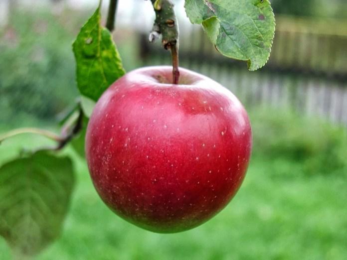 Applein tree 01
