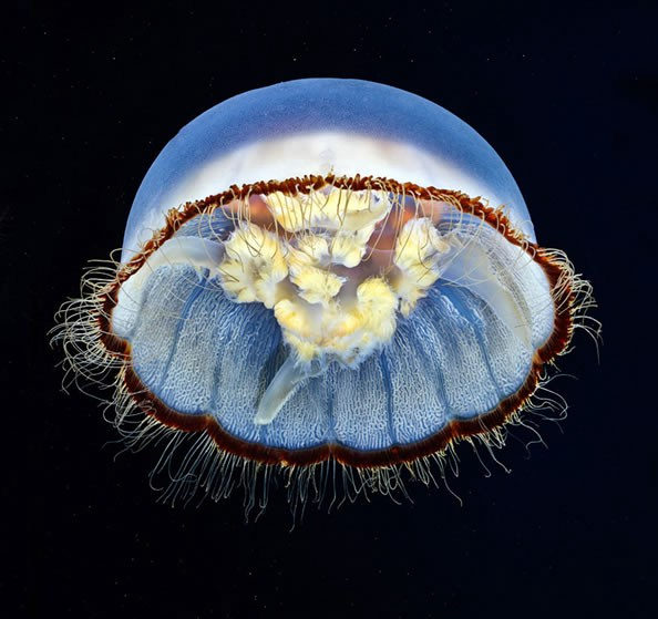 Jellyfish-photography-finle-14