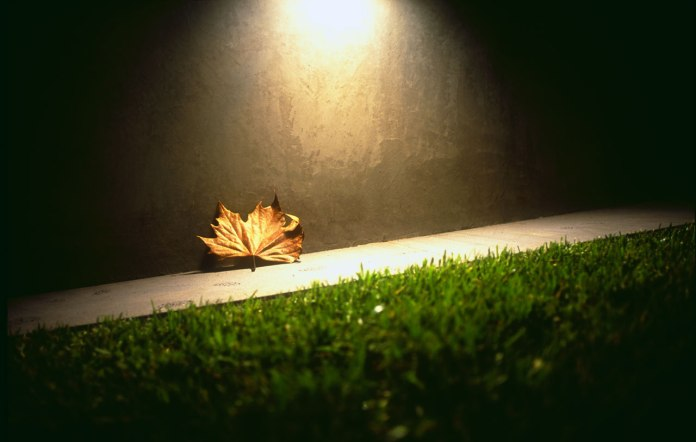 Lonely_Winter_Leaf