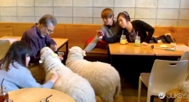 萌翻!南韓「羊咩咩」咖啡廳讓少女們崩潰啦!