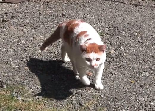 貓咪在庭院放鬆蹭背曬太陽,竟遭貓奴大膽偷拍!