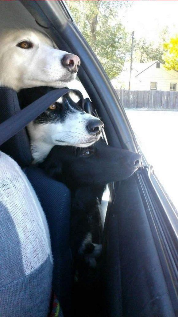 就這一 瞬間剛甩人類好幾條街的狗狗恩愛幸福照!