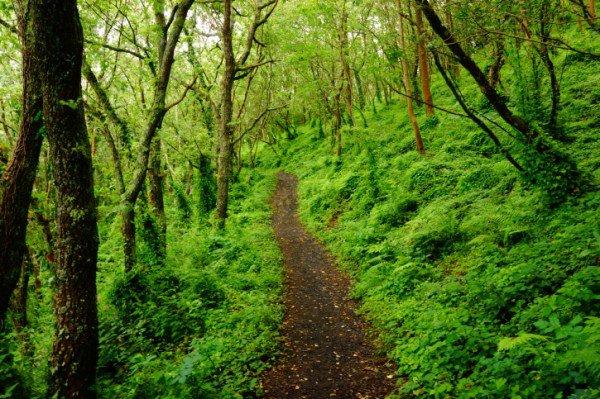 請從這6個森林圖片中選出一條你想走的路,這將會透露出你內心性格和感情的追求!