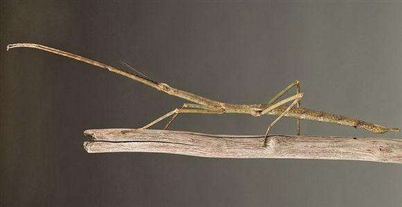 2015年最新發現的10大新物種,