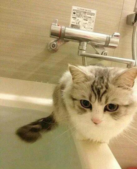 喵喵为什么喜欢偷看主人洗澡? 原来是 ...