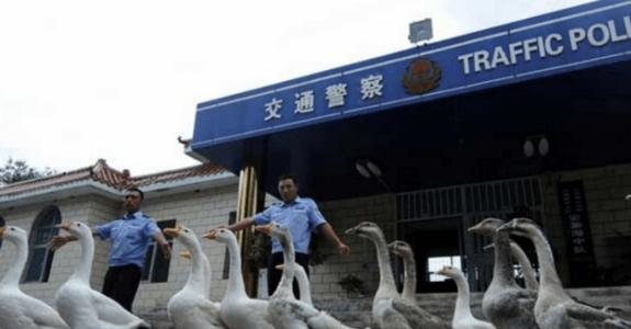 會讓遊客大跌眼鏡的9個中國小知識