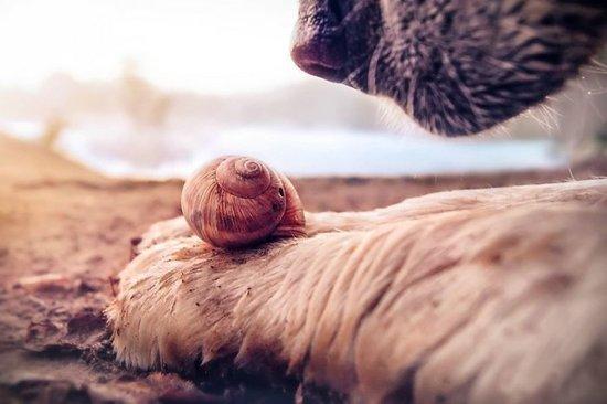 女攝影師獨特表現力,拍出蝸牛的超唯美勇敢面