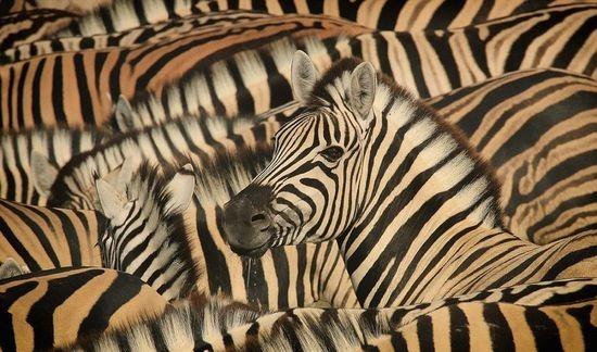 攝影師精彩作品,野生動物日常生活瞬間