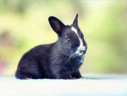 小兔子出生的1-30天,這真的把我萌的心都化了,尤其最後一張!