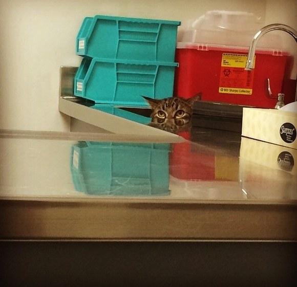 你能找到圖中的貓嗎?只有不到1%的人能全部找到哦!