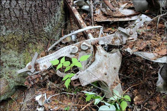 飛機失蹤80年後被重現,機上巨額現金不知去向!