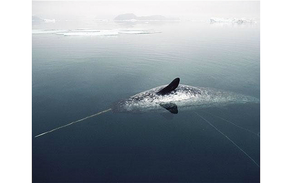 12種極地出現的動物,看完