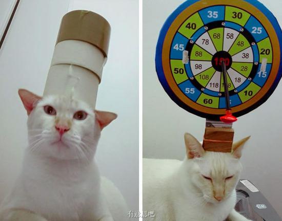 朕只用腳就能贏你,傲嬌白貓的黃金之腳萌爆網路!