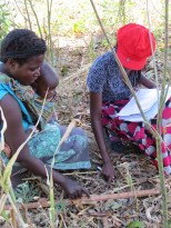 A farmer in Golomoti, Malawi, explains to a surveyor the spacing between plants in a pigeon pea plot. Knowing the spacing of these crops helps researchers understand the plant density. Photo: Erin Anders.