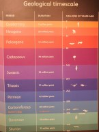 The lifespan of living organisms on earth