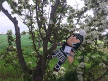 Sparty climbed a tree at one of the Game Of Thrones locations, the stunning avenue of beech trees appeared in Game of Thrones when Arya Stark escaped from King's Landing disguised as a boy.
