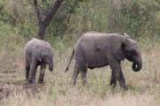 Elephants (My favorite :) )