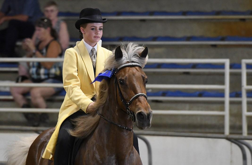 image: Appalachian Horse Revival