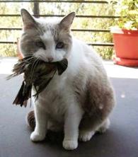 catwithbird_USFWSphoto