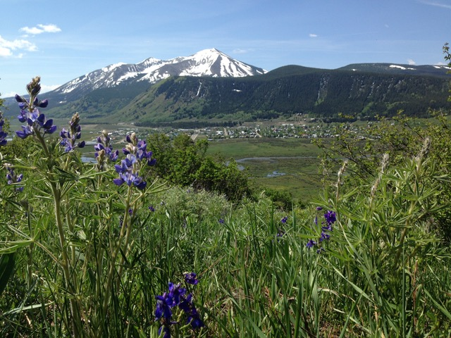larkspur from lupine trail crested butte