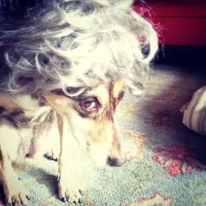 Django in a wig