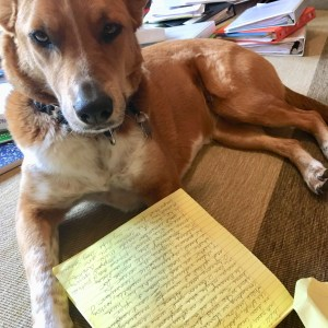 Photo of my dog Nola looking at documents
