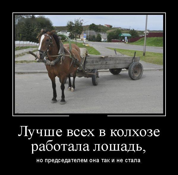 Лучше всех в колхозе работала лошадь  демотиватор, прикол, юмор