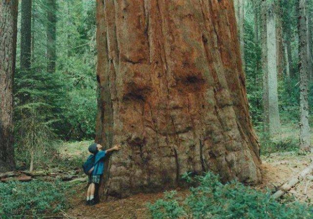 12. Embrasser l'arbre, les arbres, la tromperie, la pareidolie, on dirait que ce n'est pas la même chose, on dirait que ça ressemble à un visage