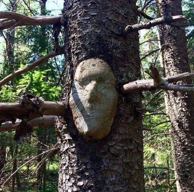 24. Visage dans le tronc d'un arbre, arbres, tromperie, pareidolia, il semble que oui ce n'est pas pareil, on dirait que ça ressemble à un visage