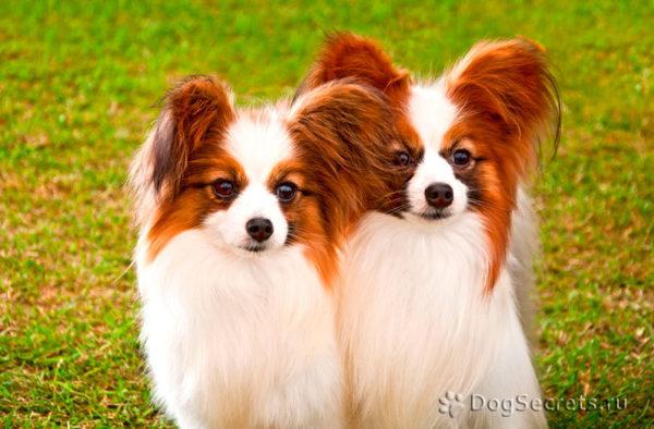 10 самых агрессивных пород собак