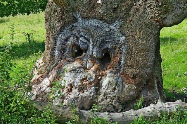 19. Tree-hibou, arbres, tromperie, pareidolia, il semble oui ce n'est pas pareil, on dirait que ça ressemble à un visage