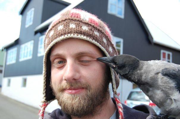 """Парень хотел сделать селфи с милой вороной, как вдруг """"Ааа, мой глаз!"""" вороны, животные, птицы, фото"""