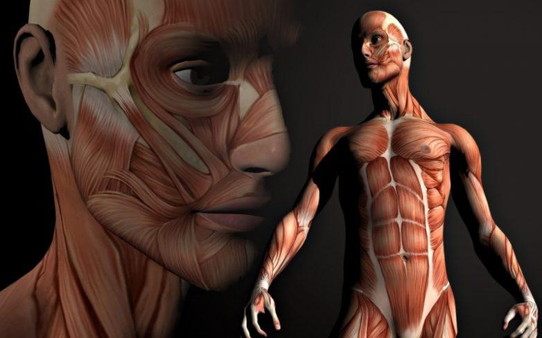 На самом деле наше тело обновляется вот с какой скоростью