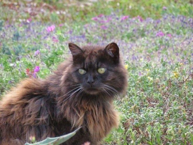 Черные кошки могут ржаветь животные, коты, факты