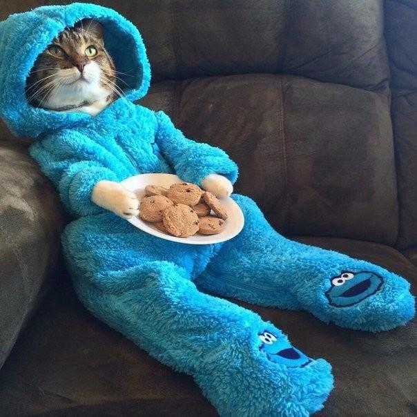 Кошка не любит, когда вы ее одеваете