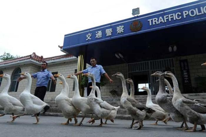 OddChina10 21 шокирующий факт про Китай