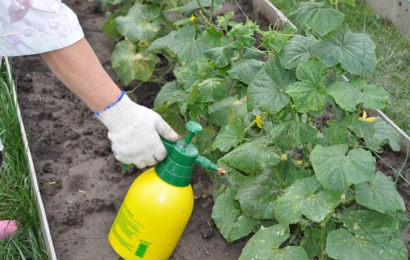 опрыскивать растения борной кислотой
