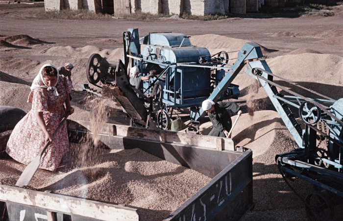 Сбор пшеницы в колхозе. Украина, 1950-е годы. Фото: Semyon Osipovich Friedland.