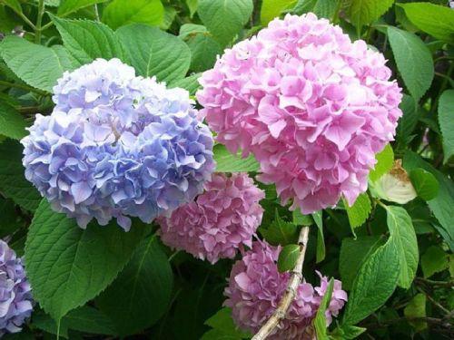 10 домашни растения, които могат да убият човек! Проверете дали ги нямате и вие (руски език)...