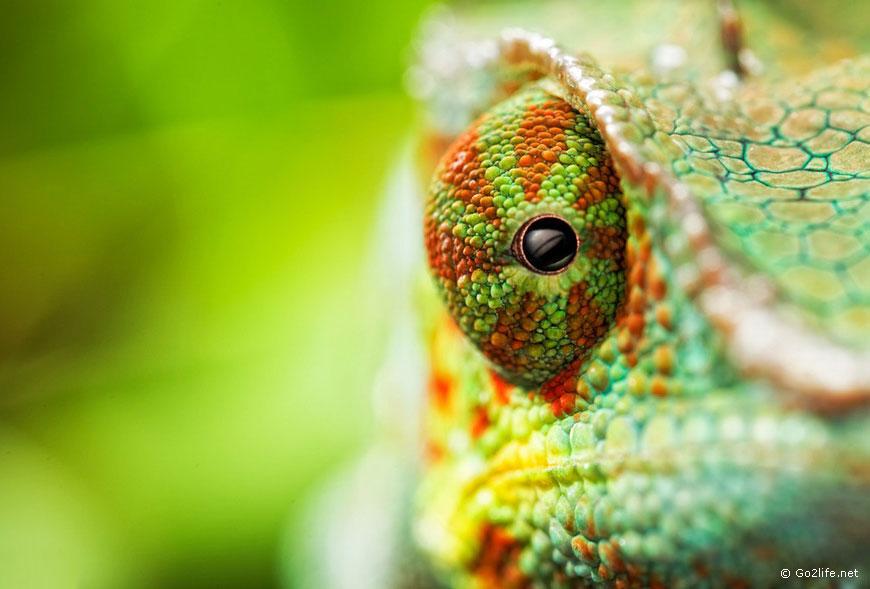41 фото животных. Уникальные кадры живой природы