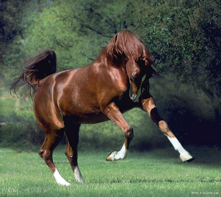 Фото лошадей во всем их великолепии. - ТАЙНЫ ВСЕЛЕННОЙ ...