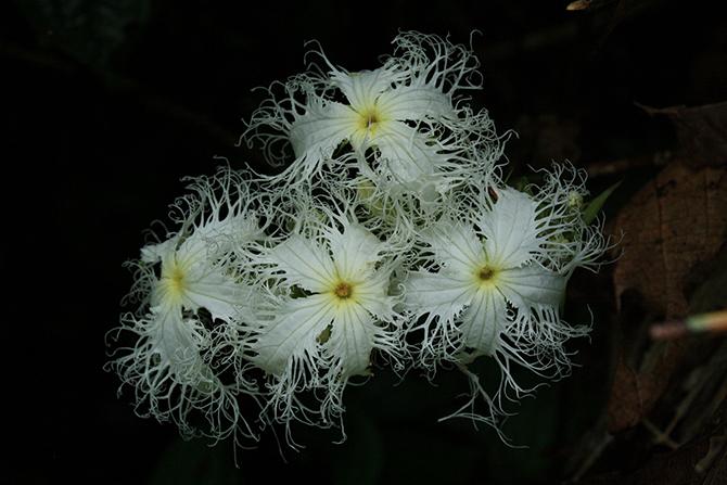 Удивительная красота растений - Пропорции счастья ...